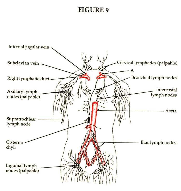 great diagram of lymphatic system photos